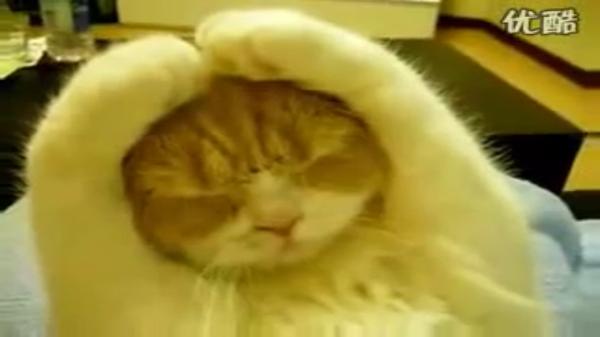 「うるさいにゃあ!もう!」両手で両耳を上手でふさぐ猫ちゃん。「静かにしてよね!」