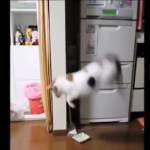 パニック!びっくりして飛び上がる猫たちがかわいそうだけど可愛すぎる