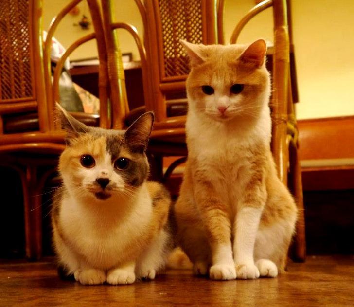 【行ってみたい♡】猫カフェならぬ猫居酒屋が東京・江古田にあった
