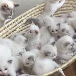 この中に埋もれたい・・・。籠の中からモフモフの子猫ちゃん21匹~!!!(*´ω`*)
