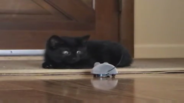 黒猫の赤ちゃんがリモコン操縦で動くねずみを飛び跳ねながら追いかけまわす!近づきたいけど・・・やっぱりちょっと怖いニャン(*_*;
