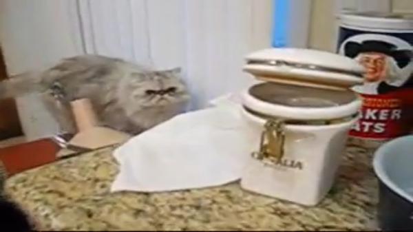 「さ!お食べ!」犬に餌を与える猫。台所から犬の餌を一粒ずつ器用に盗み犬にあげる。