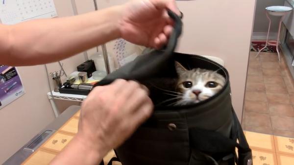 「イヤーーー!」診察後にキャリーバックに入れようとすると抵抗しまくる猫ちゃん。お家に帰るだけなのに・・・笑