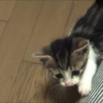 優しい飼い主さんに拾われて幸せになった、山道で捨てられていた子猫(´;ω;`)