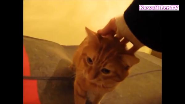 おかえり(*´∀`)帰ってきた兵隊さんと再会する猫の甘え方が半端無く可愛い(*^^*)
