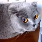 反省したり、しなかったり…いたずらした後に怒られる猫の反応が面白い( ´,_ゝ`)