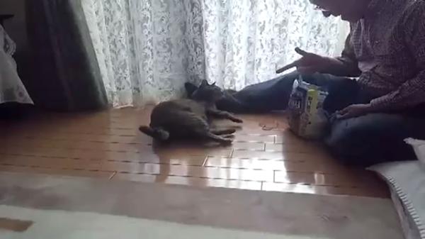 まるで犬のようU^ェ^U猫の一発芸が凄い!Σ(゚Д゚)