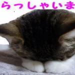 激かわ!猫画像集にいらっしゃいませ♪たっぷりお楽しみください(^^)/