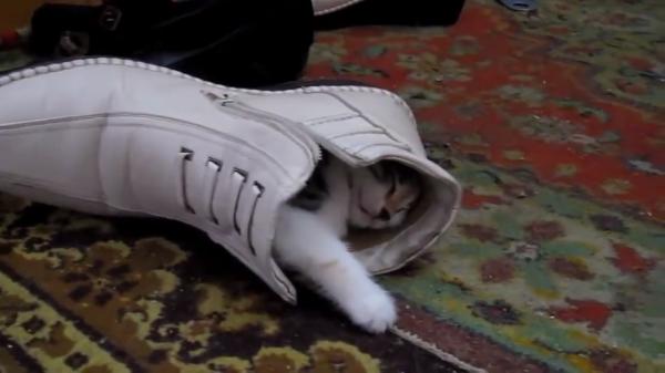 靴の中で眠る小さすぎる子猫ちゃん♡スヤスヤ・・・