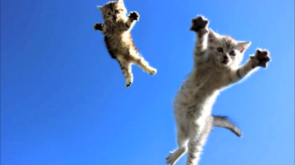 空を自由に飛びたいニャン♪躍動感あふれる猫が飛ぶ瞬間(((((((((((っ・ω・)っ
