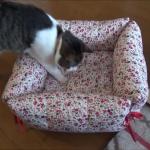 100均で猫用のベッドを作ってみた♪気になる猫の反応は??