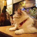 【猫の街・神楽坂】神楽坂の看板猫に会いに行きたい♪