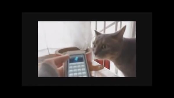 猫語翻訳アプリを使ってみた♪果たして猫に通じるのか大実験(*^^*)