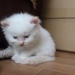 眠くてウトウト・・・ふわふわの子猫ちゃんのトロンとしたおめめ♡