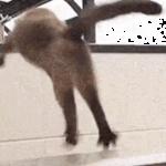 ニャンでこうなるの~!?ジャンプに失敗した猫が面白い( ´,_ゝ`)