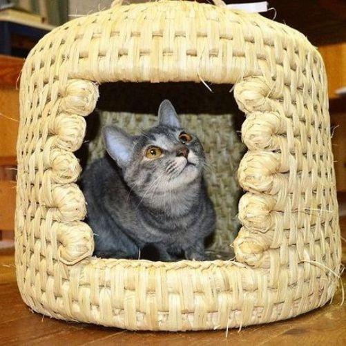 【これは良いかも♡】ふるさと納税で猫つぐらなどの様々な猫グッズがもらえるんですって!!