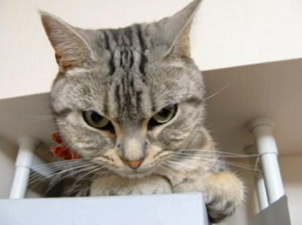 もっとかまってニャ…。拗ねてイジける猫ちゃん特集♪目が据わってますw