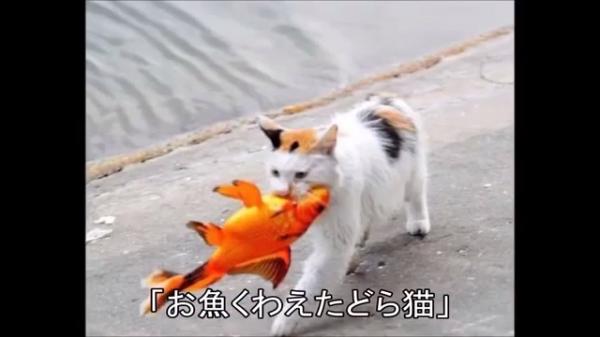 サザエさんでおなじみのお魚くわえたどら猫の実写版(=^・^=)