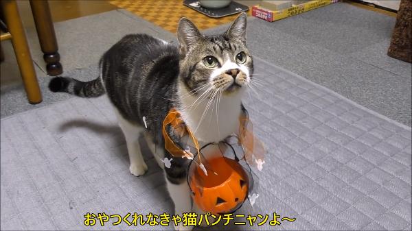 トリックオアトリート!!おやつを貰いに来るハロウィン猫