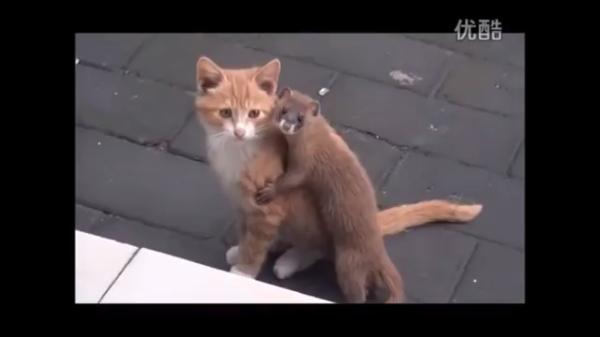猫とイタチが出会ったら……?種別を越えた友情が芽生えました♡