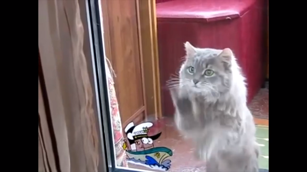 中に入れるニャン!!ヽ(`Д´)ノ家の中に入りたい猫の動きが笑える( ´,_ゝ`)
