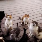 扉を開けたら大量の猫が集まっていたΣ(゚Д゚)家の外でエサを待っていた猫たちの大合唱♪