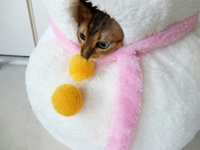 【猫ベッドがキュート過ぎる♪】寒い冬!猫ちゃんに温かいベッドを用意してあげよう♡