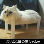 疲れた時にはこれ♪思わずクスっとなってしまうオモシロ猫ちゃん特集(*'▽')