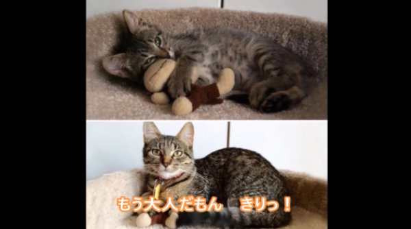 成長に感動♡ネコのビフォーアフター写真集「こんなに大きくなったのニャン!」