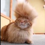 面白い&可愛い♡話題の猫動画人気TOP10!【2016年10月集計分】