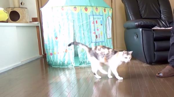 【飼い主さん必見】猫のおもちゃレビュー♪蜂型猫じゃらしDa Beeの反応とは…?
