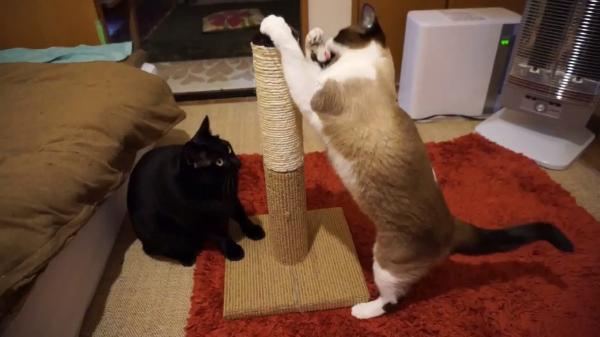 【猫用グッズレビュー】飼い主さん必見!一番売れている爪とぎタワーを試してみた!猫の反応は?