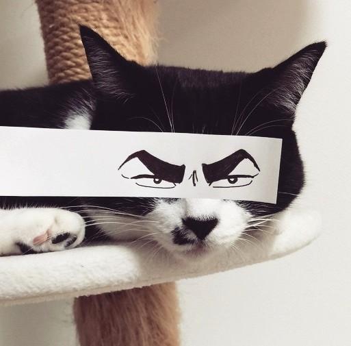 【猫ちゃんをキリリと変身させよう♪】今、猫モンタージュ写真があつい!!