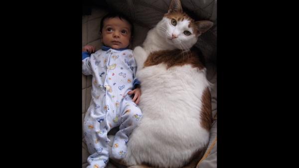 超巨大な猫たちに驚愕!迫力満点のネコ達!