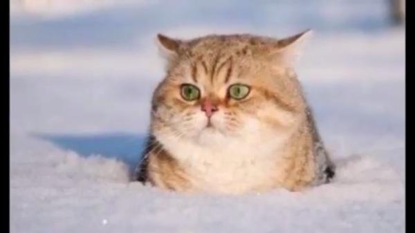 面白いけどちょっと健康が心配!?おデブな猫たちの可愛い瞬間(*^^*)