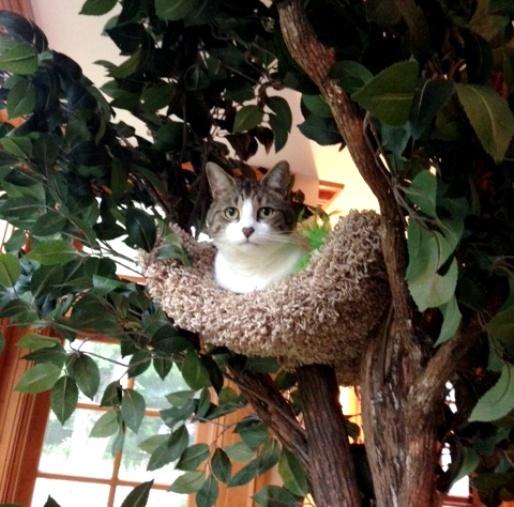 【木登り出来ちゃう?!】猫ちゃんが上れるツリーハウスがすごい!!