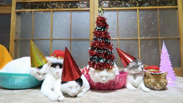 猫たちのまったりとしたクリスマスパーティー 頭にツリーが乗っていても気にしニャい♪
