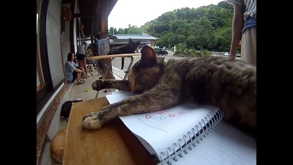 福井県にある「ぬこてら」とは?仏さまの力とのびのびと暮らす猫に心が洗われる!