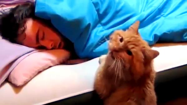 ひょっとして……。起きない飼い主を不安そうに見つめるとっても健気な猫♡