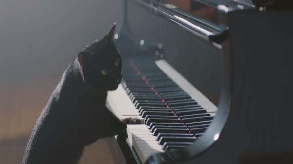 ピアニスト黒猫による「ねこふんじゃった」のクオリティが高すぎww