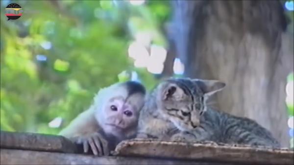 「犬猿の仲」ではなくて「猫猿の仲」?猫と猿は仲良しなのか?