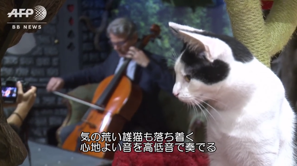 【飼い主さん必見!?】猫専用の音楽を集めたアルバムがあるらしい♪