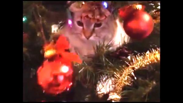 クリスマスツリーの飾り物に猫はいかが?かわいい猫とツリーのコラボ♡