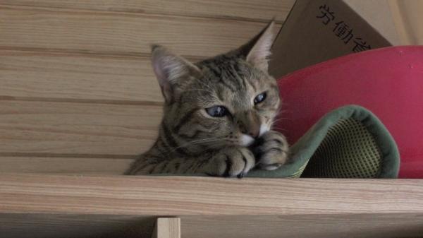 猫と遊ぶ女の子。どちらも無邪気で可愛すぎ~♪