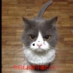 絶対許さニャい!!憎悪に満ちた猫の表情集が凄い!
