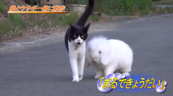 姉弟みたい♡毎日一緒に散歩をするネコとウサギが可愛すぎる~♡