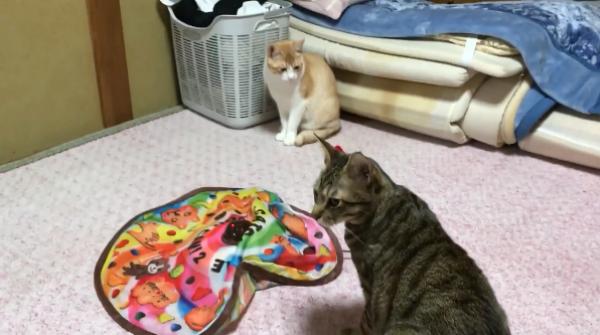 これで遊んで欲しいのにw動くオモチャを横目に、とても冷静な猫ちゃんたちwww