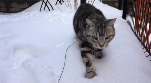 はしゃぐ姿がとっても可愛い♡雪遊びをするネコちゃん♡