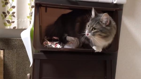 たしかここにご飯が……餌が入っている箱に侵入する猫が器用すぎwww