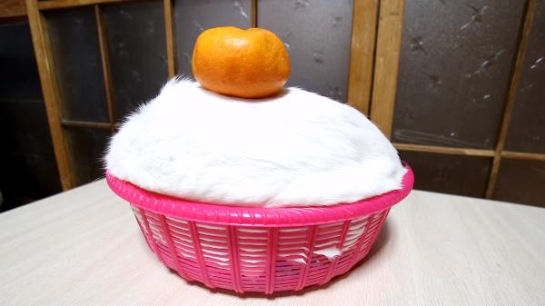 ふわふわの鏡餅♪猫でできた鏡餅がおめでた可愛い♪